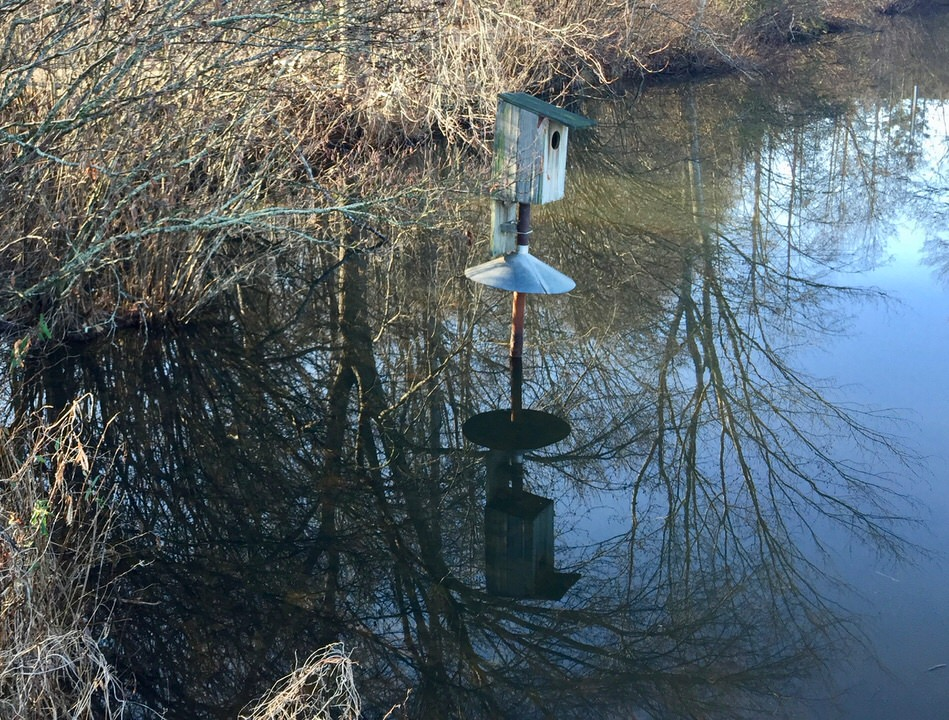 Wood Duck Boxes Why My Pond Platinum Ponds Amp Lake