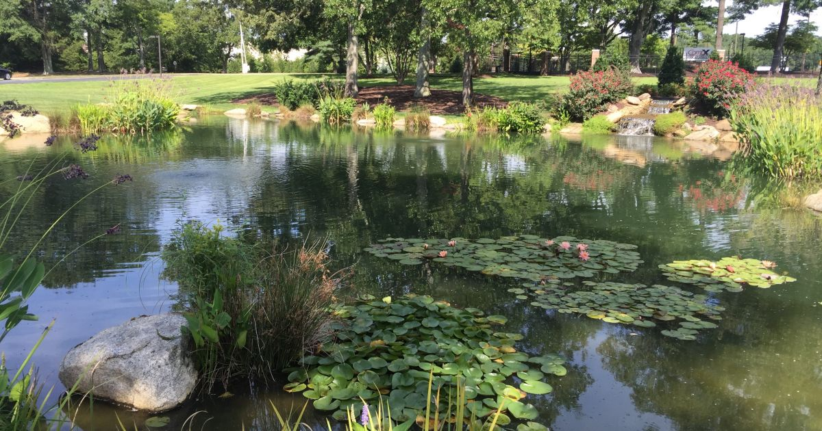 Why Are Pond Buffers Essential For A Healthy Pond