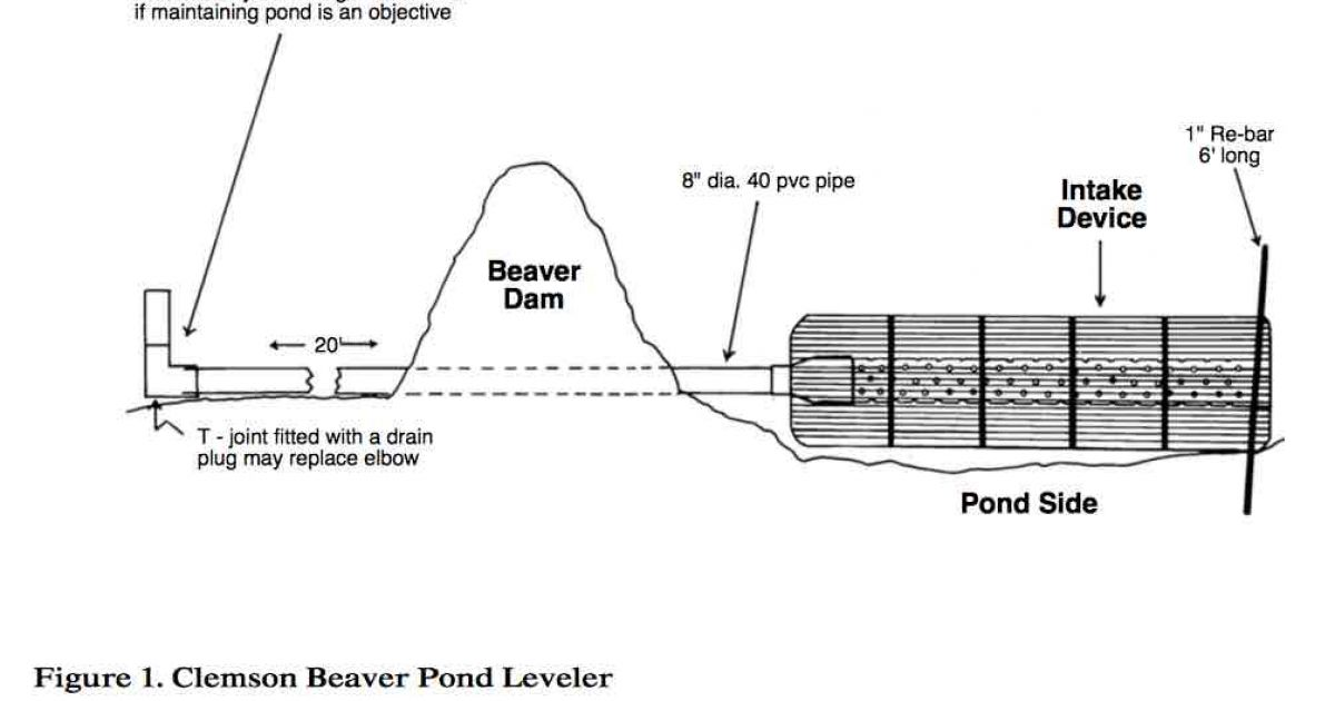 Water Pipe Structures : Beaver solution for clogged pipes emergency overflows