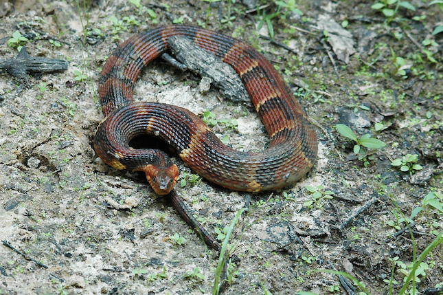 water snake charlotte nc